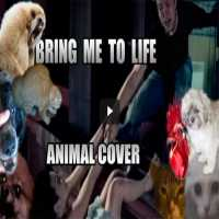 Evanescence - Bring me To Life Animal Cover