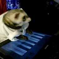 Keyboard Ferret