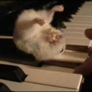 Vídeo de Hamster no Piano